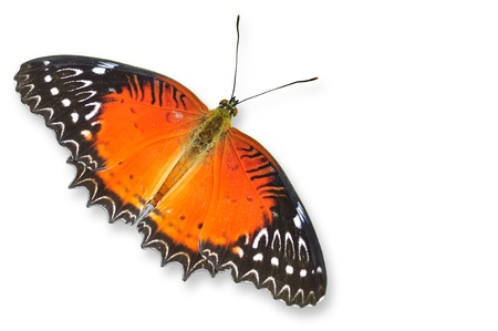 biblis: Red butterfly flying isolated on white