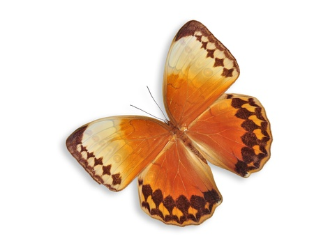 Orange butterfly flying isolated on white background. Stock Photo - 14492444