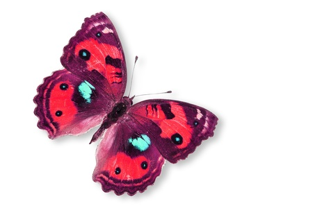 Red Butterfly Isolated on white. Stock Photo - 14492432
