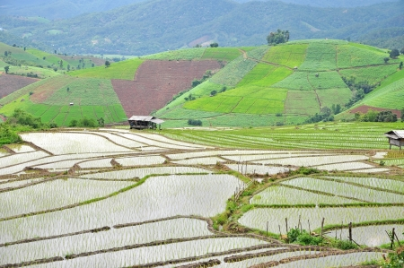 terrace rice fields, Chiang Mai Province, Thailand Stock Photo