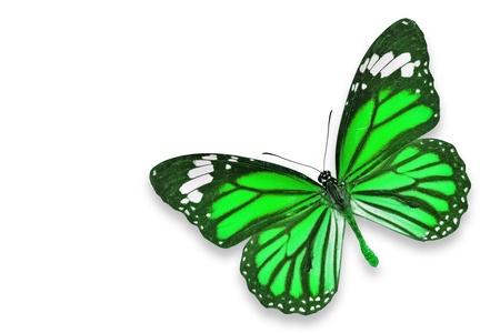 mariposa verde: Verde de la mariposa de vuelo