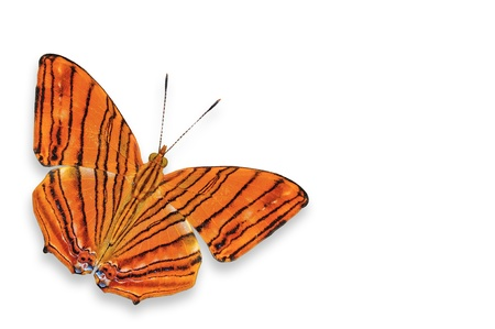 A orange butterfly isolated on white  Stock Photo - 14650903