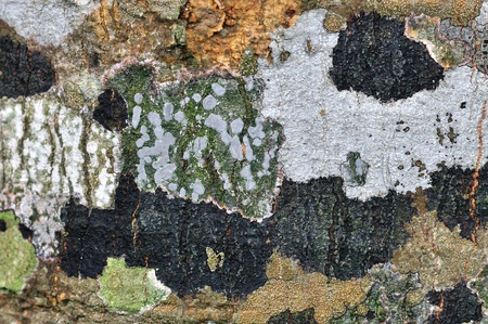 Lichen on wood surface photo