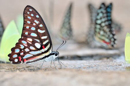 Butterfly on nature  photo