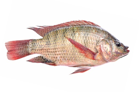 Fresh fish isolated on a white background  Zdjęcie Seryjne