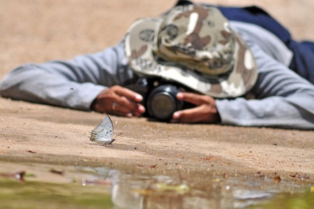 behind the scenes: Behind the scenes of macro butterfly. Stock Photo