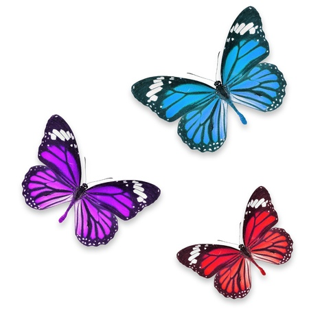 Red Purple and blue butterflies isolated on white with soft shadow beneath each  photo