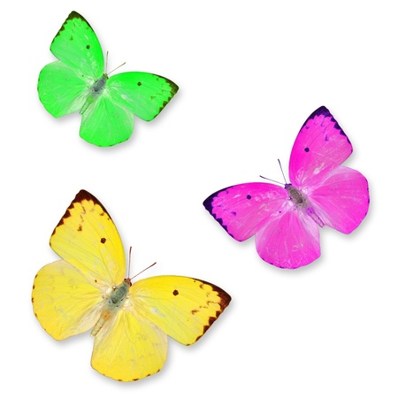 Yellow pink and Green butterflies isolated on white with soft shadow beneath each photo