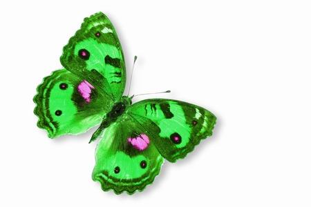 mariposa verde: Verde de la mariposa voladora Foto de archivo