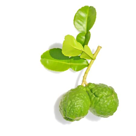 Three leech lime, Kaffir Lime fruits isolated on white  photo