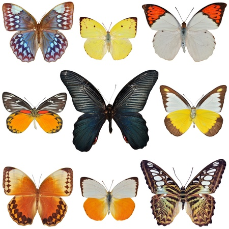 Collection of colored butterflies isolated on white Stock Photo - 15524529