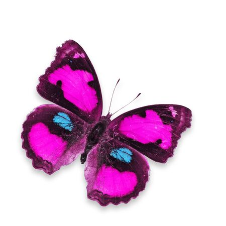 papillon rose: Pink Butterfly voler isol� sur blanc