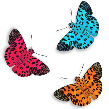 Orange red and blue butterflies isolated on white with soft shadow beneath each photo