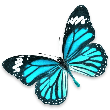 Blue Butterfly flying isolated on white background Banque d'images
