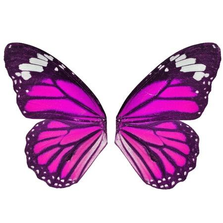 papillon rose: aile de papillon isol� sur fond blanc Banque d'images