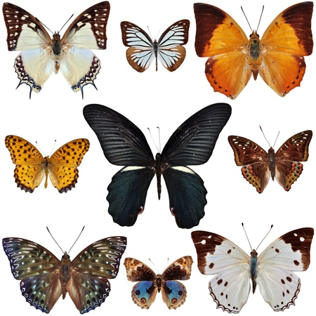 Butterfly Collection isolated on white  photo