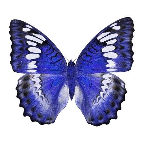Blue butterfly isolated on white background photo
