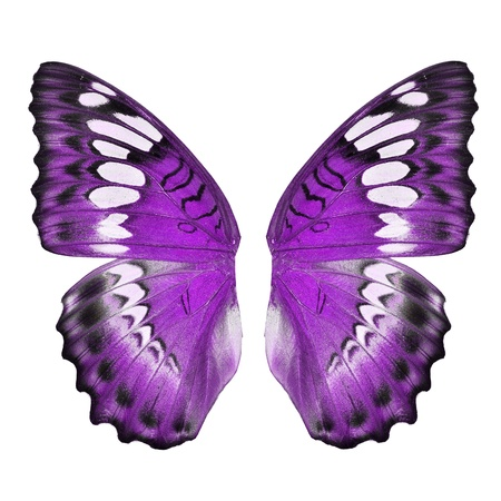 Purple butterfly wing isolated on white background Banque d'images