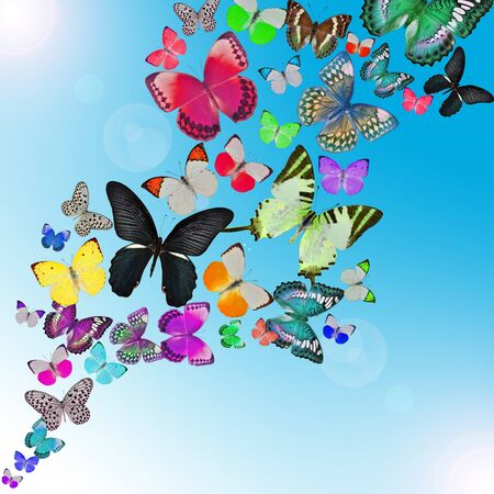 Colorful background with butterfly photo