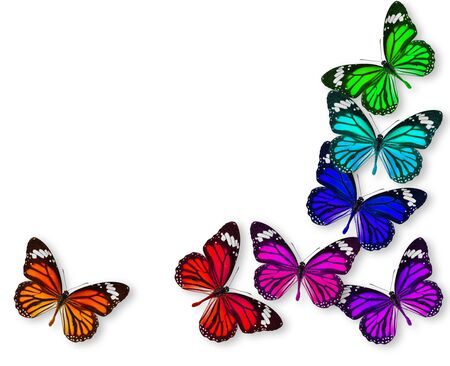 Colorful background with monarch butterfly photo