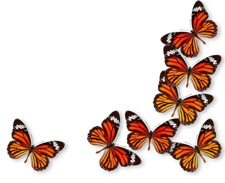 mariposas volando: Fondo colorido con la mariposa monarca