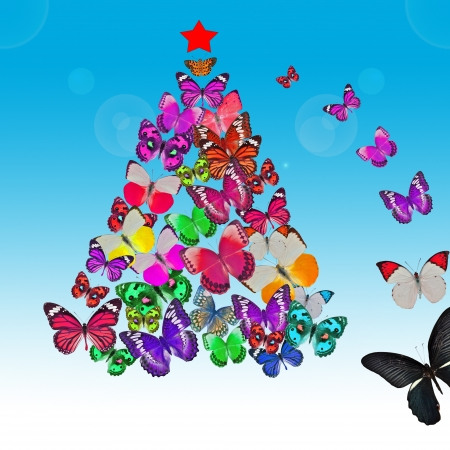 colorful butterfly christmas card photo