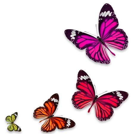 butterflies flying: Farfalla colorata isolato su sfondo bianco Archivio Fotografico