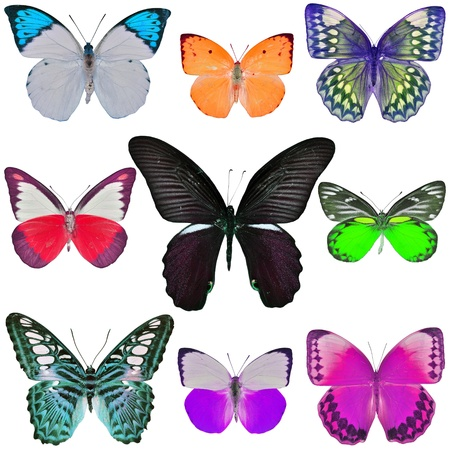 butterfly wings: Collection of colored butterflies isolated on white