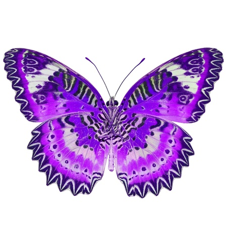 purple butterfly: Purple butterfly, isolated on white background Stock Photo