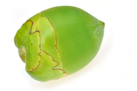 Green coconut Fruit isolated on white Stock Photo - 16802618