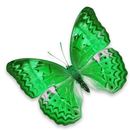 mariposa verde: Mariposa verde aislado en el fondo blanco Foto de archivo