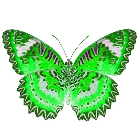 mariposa verde: Mariposa verde aislado sobre fondo blanco