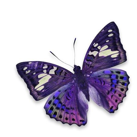 흰색 배경에 고립 된 화려한 나비