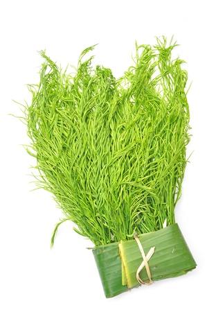 pennata: Acacia pennata or cha-om isolated  Stock Photo