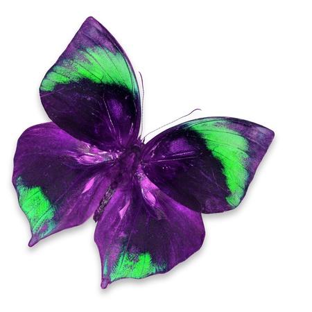 mariposa verde: P�rpura y verde de la mariposa aislado en fondo blanco