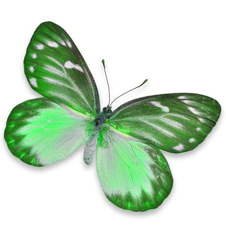 mariposa verde: mariposa verde aislado sobre fondo blanco Foto de archivo