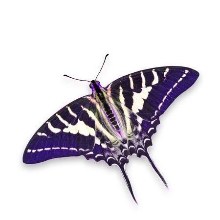 Purple butterfly isolated on white background Archivio Fotografico