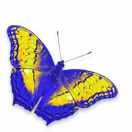 colorful butterfly: colorful butterfly isolated on white background