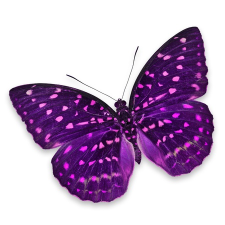 Purple butterfly isolated on white background Zdjęcie Seryjne