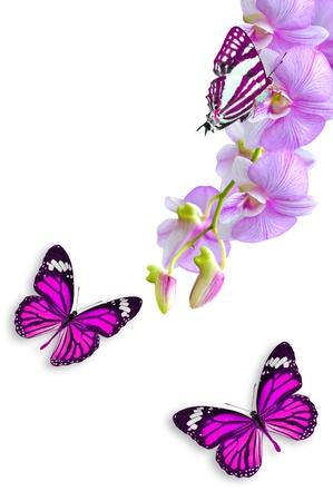 분홍색 난초 꽃과 나비 흰 배경에 고립