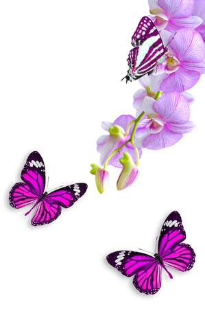 Pink orchid flowers and butterflies isolated on white background