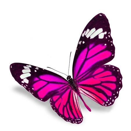 papillon rose: Pink Butterfly volant isolé sur fond, ombre blanche molle en dessous.