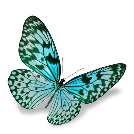 mariposa azul: Blue Butterfly vuelo, aislado en fondo blanco