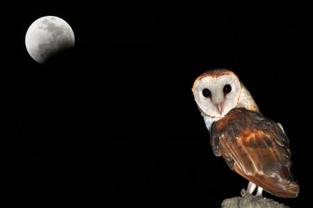 夜に座っているフクロウ鳥