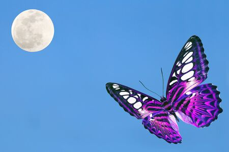 purple butterfly: Purple butterfly with blue sky and the moon