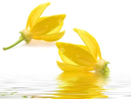 水にイランイランの花 写真素材