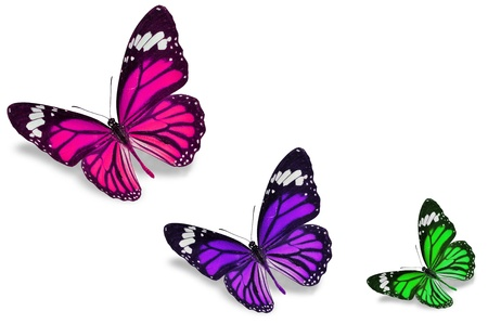 purple butterfly: Colorful butterflies