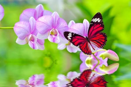Een mooie kleurrijke vlinder op orchideeën bloemen in het water