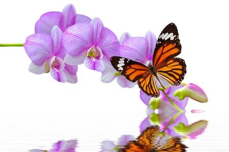 orchidee: Una bella farfalla colorata su orchidee fiori in acqua