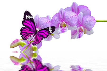 A beautiful pink butterfly on orchids flowers in water photo